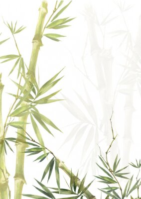 Bild Watercolor illustration painting of bamboo leaves , on white background