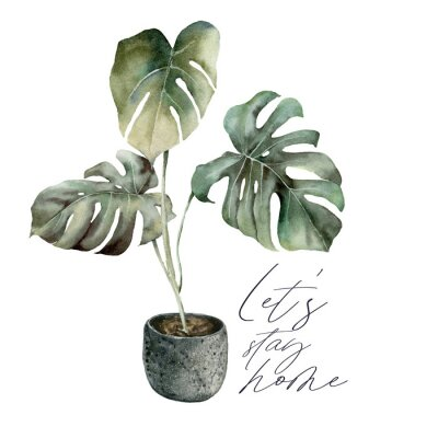 Bild Watercolor Lets stay home card with monstera. Isolation during an epidemic. Hand painted exotic plant with pot isolated on white background. Floral illustration for design, print or background.