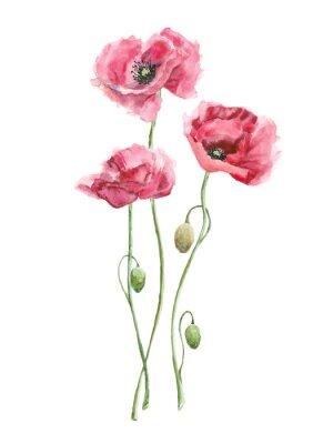 Bild watercolor red flowers (poppies)