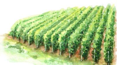 Bild Watercolor Sketch Rural Scene Fragment of Vineyard