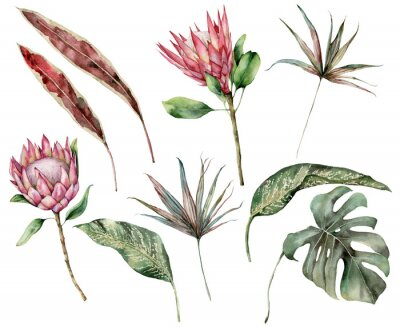 Bild Watercolor tropical set with protea and palm leaves. Hand painted exotic flower, palm and monstera leaves isolated on white background. Floral illustration for design, print, fabric or background.