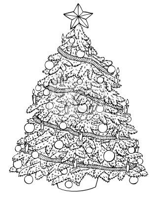 Weihnachtsbaum Tannenbaum.Bild Weihnachtsbaum Christbaum Tannenbaum Weihnachten