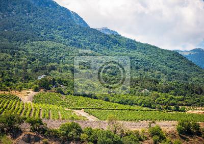 Weinberge am Hang des Krim-Berge