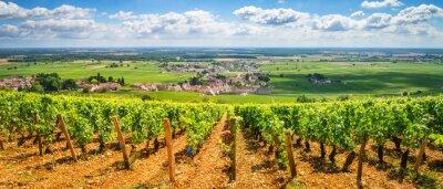 Bild Weinberge von Burgund, Frankreich