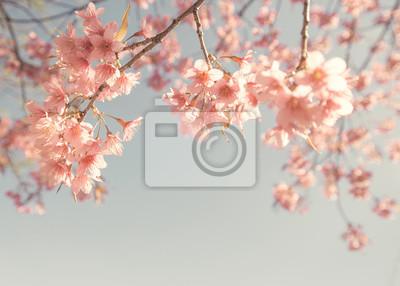 Bild Weinlese-Kirschblüte - Sakura-Blume. Natur Hintergrund