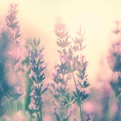 Weinlese sonnigen Lavendel