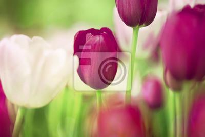 Weinlese-Tulpen