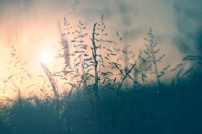 Weinlese-Wiese Sonnenuntergang