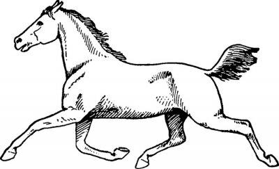 Bild Weinlesezeichnungspferd