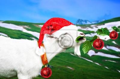 Weiß neue Jahr Ziege auf einer Wiese