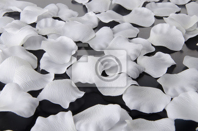 Bild Weiße Blütenblätter