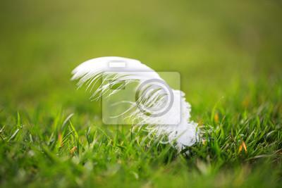 Weiße Feder auf dem Rasen lag