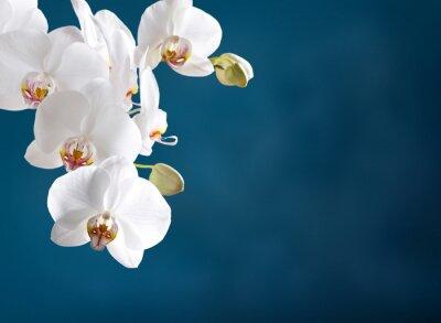 Bild Weiße Orchidee