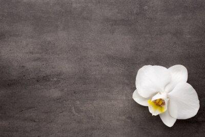 Bild Weiße Orchidee auf dem grauen Hintergrund.