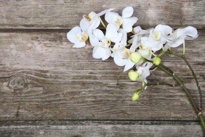 Bild Weiße Orchidee (Phalaenopsis)