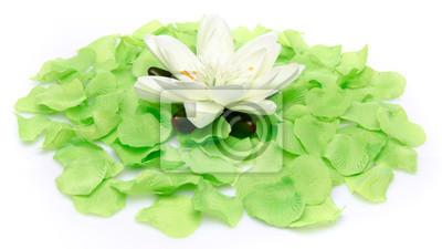 Bild Weiße Seerose auf einem Teppich aus grünen Blütenblätter