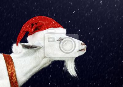 Weiße Ziege, das Weihnachtsmann-Hut
