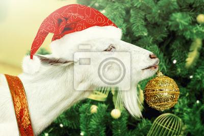 Weiße Ziege schmückt Weihnachtsbaum