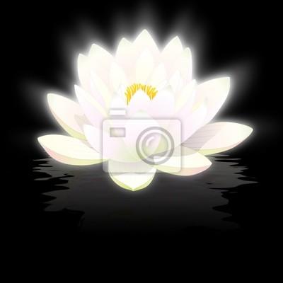 Weißen lotus blume auf schwarzem hintergrund mit reflexionen ...