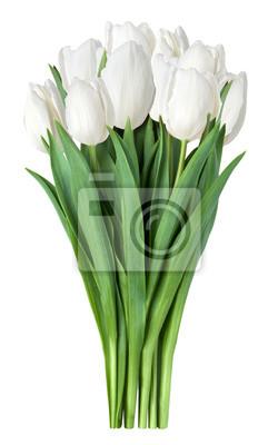 Bild weißen Tulpen