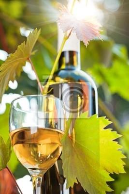 Weißwein Flasche, junge Reben und Glas