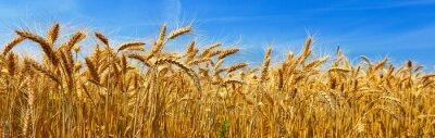 Bild Weizen