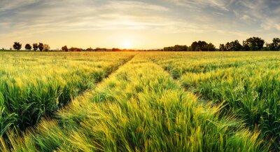Bild Weizenfeld Landschaft mit Pfad in der Sonnenuntergangzeit