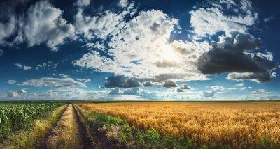 Bild Wheat and corn fields before harvest
