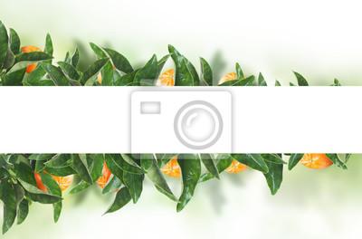 Bild White banner on tangerines green leaves. Fruit concept with mandarin