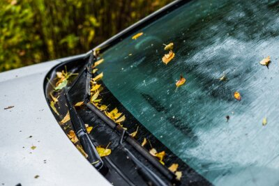 Bild white car at autumn rainy day with orange birch leaves - selective focus win blur closeup