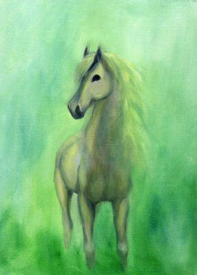 Bild White stallion