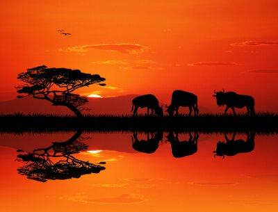 Bild Wildebeest Silhouette bei Sonnenuntergang