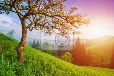 Wilder Apfelbaum auf einem grünen Hügel