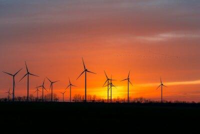 Bild Windräder in der Natur mit Vogelschwarm im Sonnenuntergang