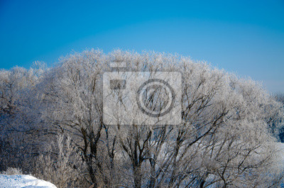 Bild winter landscape with trees and blue sky