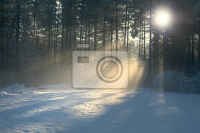 Winter-Sonnenstrahlen