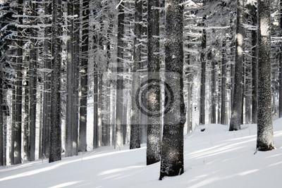 Winter-Wald-Szene