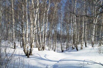 Bild Winterlandschaft mit weißer Birke