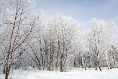 Bild Winterwald