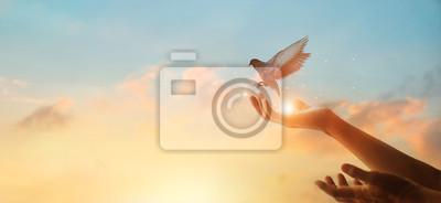 Bild Woman praying and free bird enjoying nature on sunset background, hope concept