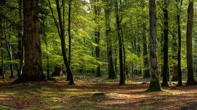 Bild Woodland walk in the new forest in Autumn