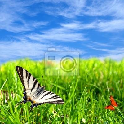 Bild Wunderschöne Landschaft mit bunten Schmetterlingen