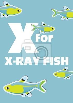 X für die X-ray-Fisch, ein Tier-Alphabet für Kinder