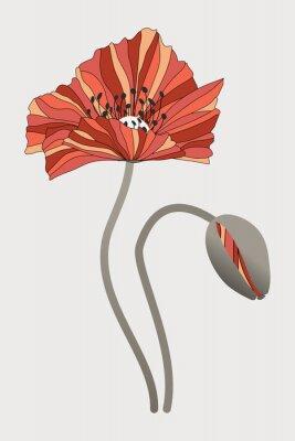 Bild бутон  и цветок мака с необычными лепестками