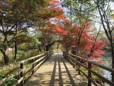 Bild 石 神 井 公園 の 木 道