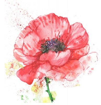 Bild Красный цветок, мак, иллюстрация акварелью