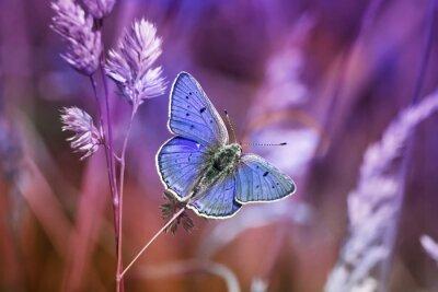 Bild Маленькая бабочка среди травы in сиреневых тонах