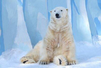 Bild Белый медведь.