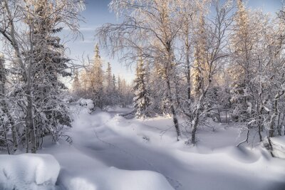 Bild Зимняя лесотундра