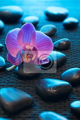 rosa Orchidee und schwarze Steine auf schwarzem Mate - blaues Licht